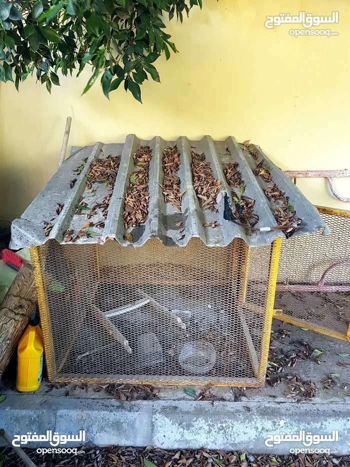 شيلا متع كلاب للبيع