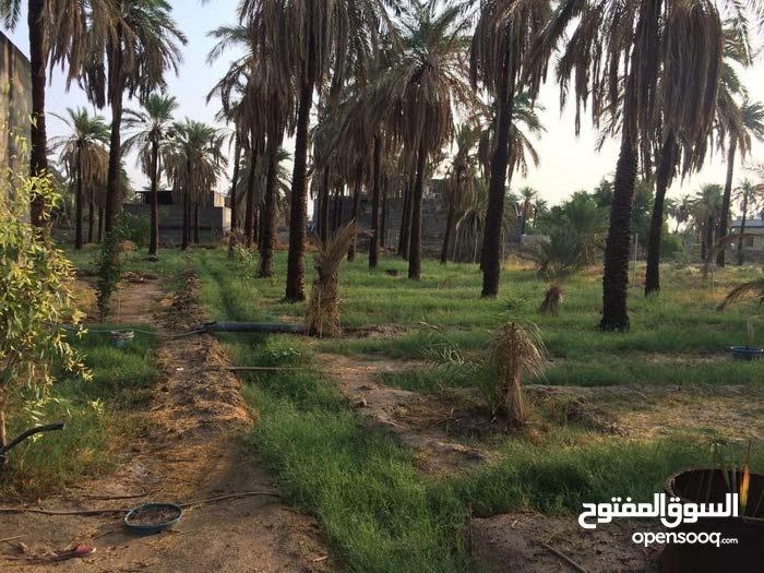 دونم للبيع مع بيت طابقين في منطقة الريان في الشط العرب