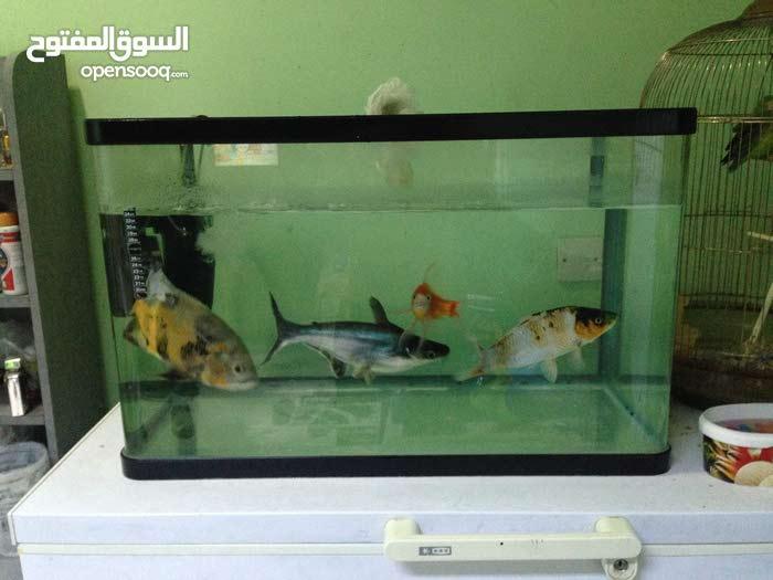 حوض أسماك +الأسماك