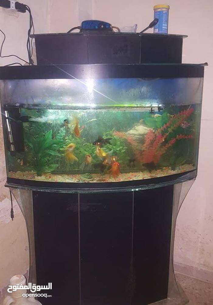 حوض سمك بسعر حررق