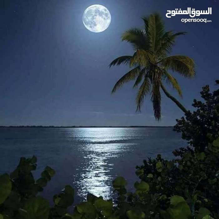 مدرس اول لغة عربيةوتربية اسلامية