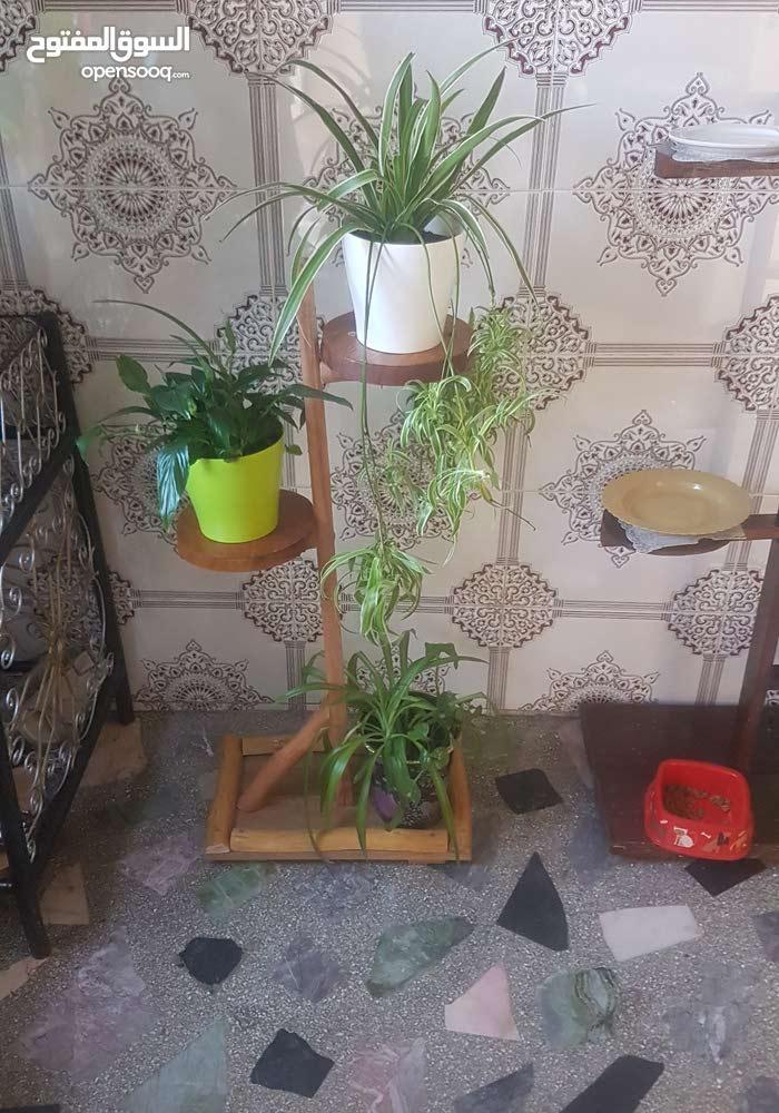 Porte plants