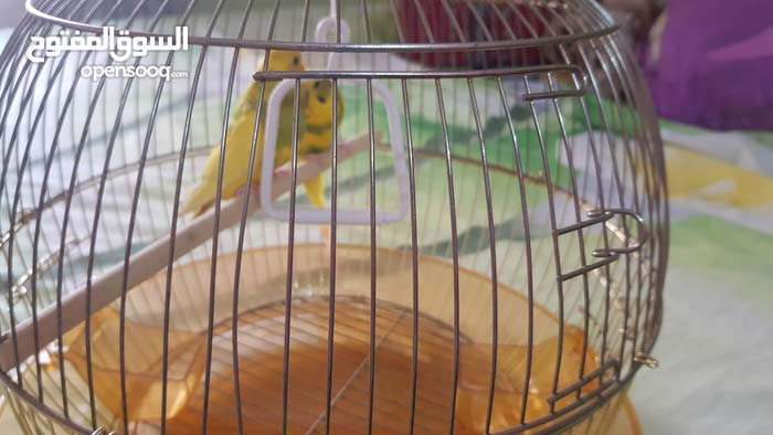 cage for sale  and budgies for free