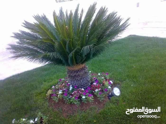 تنسيق الحدائق وزراعة جميع انواع الأشجار المثمرة والزينة  والنخيل والنجيل