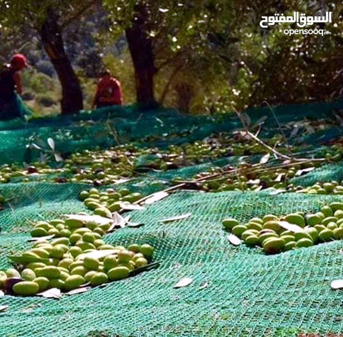 Huile d'olive de bizerte