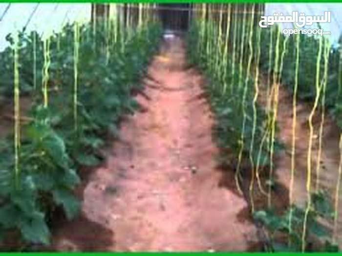 مشروعك معانا في الاستثمار الزراعي