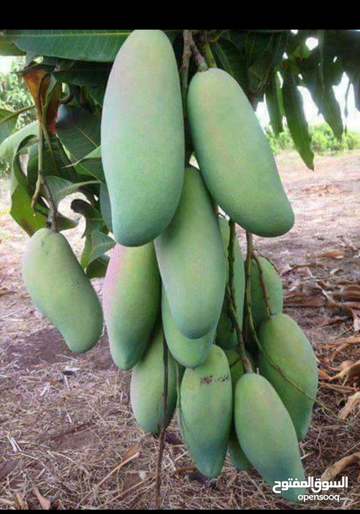 مزرعه للبيع على الترعة الرئيسيه بمنطقة المنايف الاسماعيلية