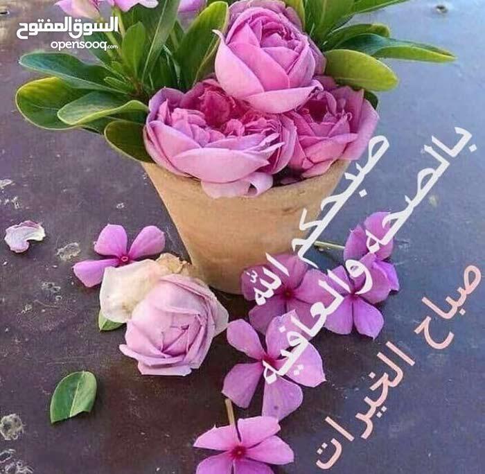 زهرأ مدينة نصر مرحل اول بعد مجمع المحكام