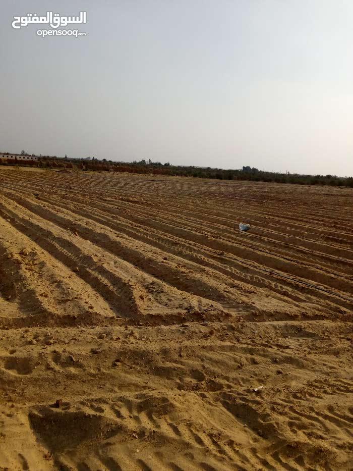 ارض زراعيه 11فدان للبيع - الفيوم