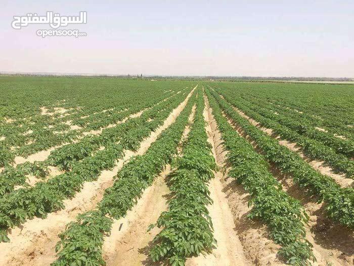 فرصة ذهبية لعشاق الاراضي الزراعية