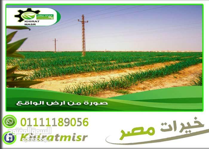 ارض بكر للزراعة في المنيا بارخص الاسعار
