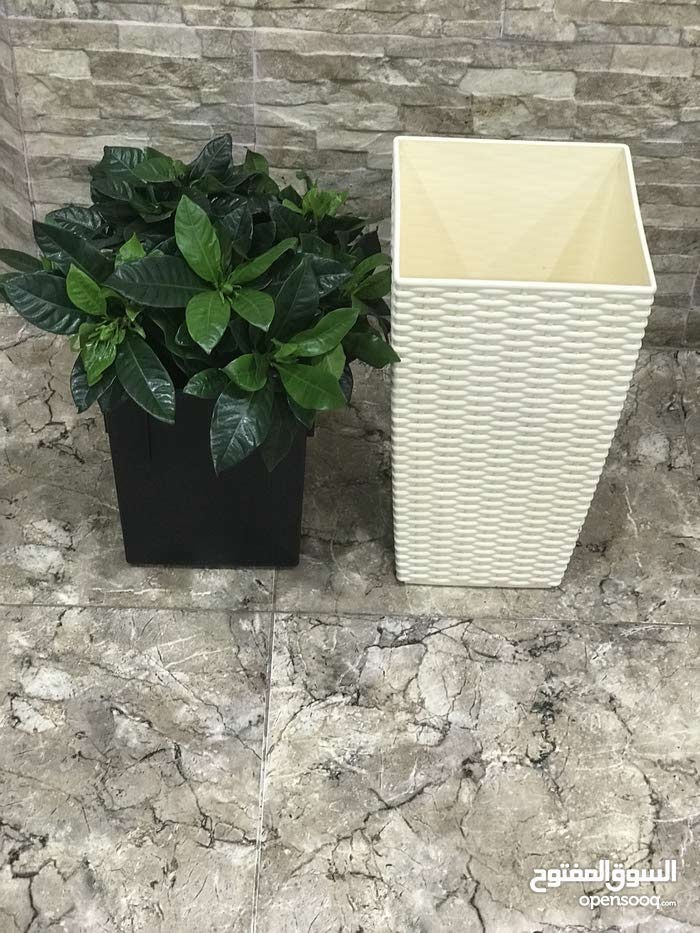 Natural and Artificial Plants for sale with high-quality specs