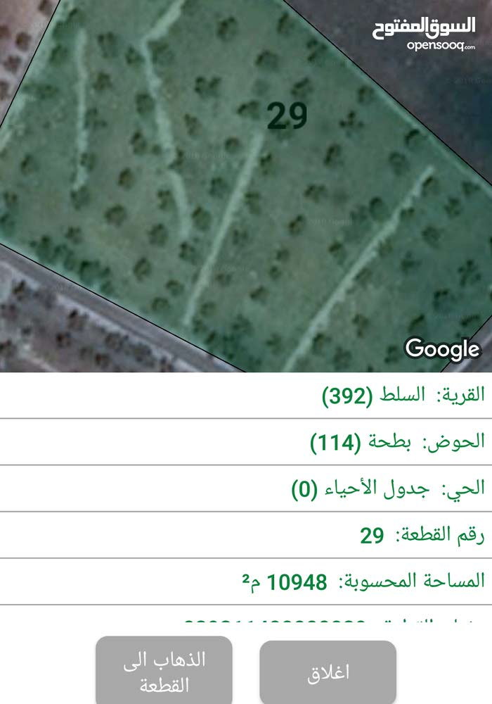 مزرعه زيتون  قريبة  من التنظيم  /بطنا حوض بطحا