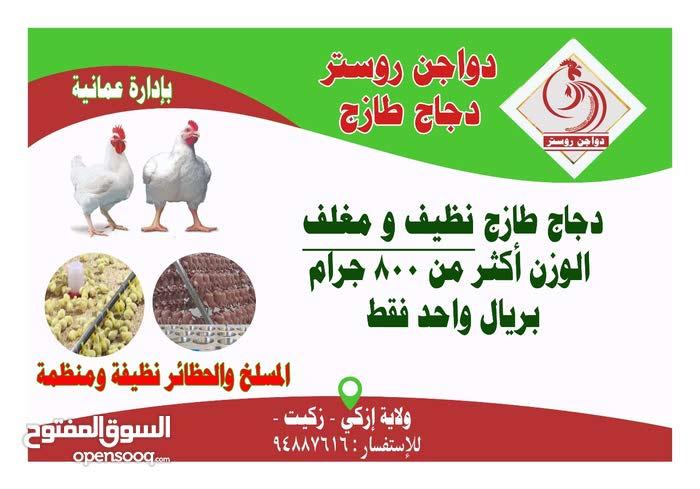 دجاج طازج