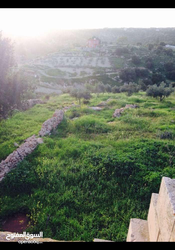 مزرعه للبيع في السلط حوض البطين مشجره بلكامل مطله على الغوار جبال فلسطين 7دنم