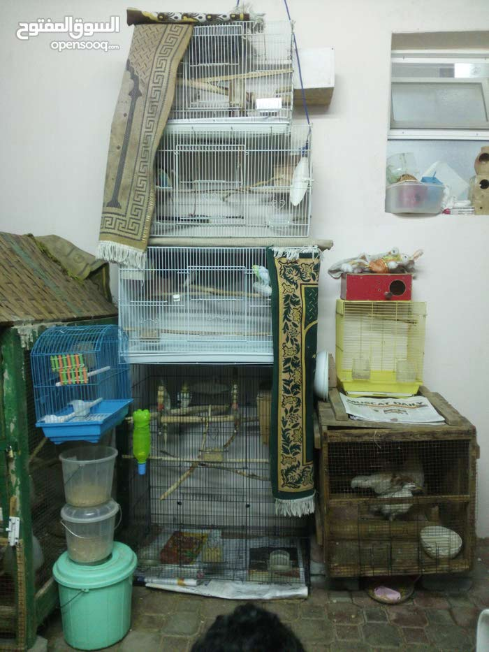 مجموعه طيور مع الاقفاص وكل المستلزمات للبيع