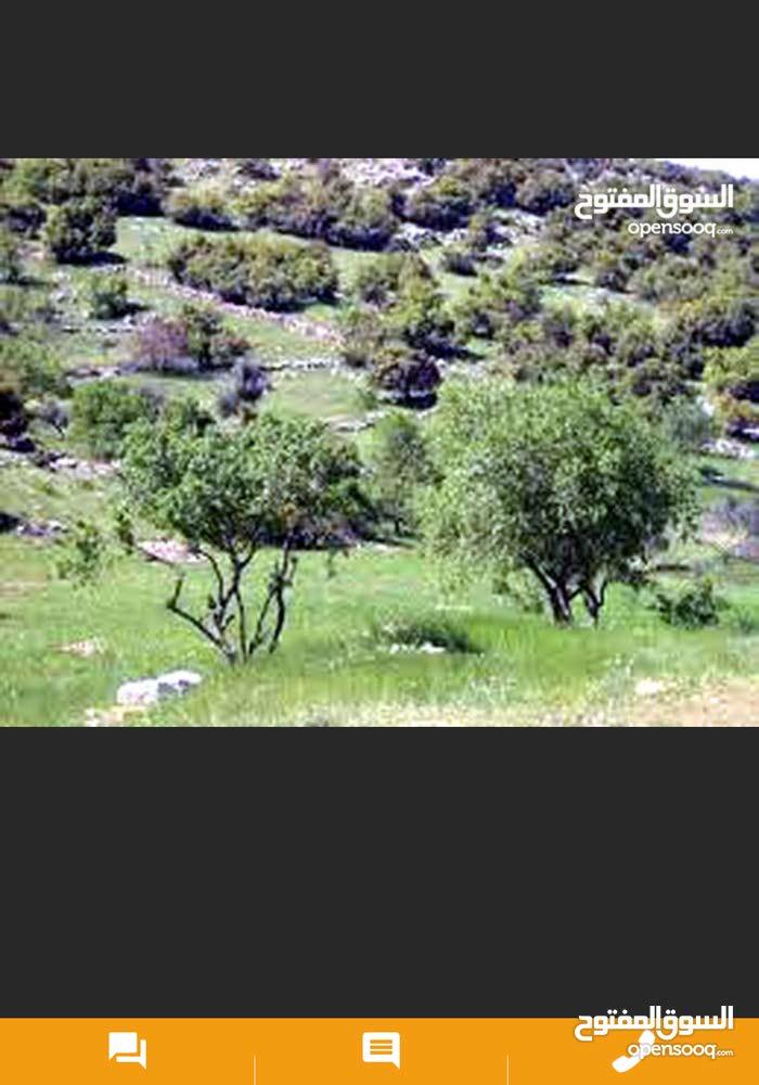 للبيع في جلعد دنم وا 400 متر على قمه جبل مطل مرتفع مميز جميل في منطقه مزارع