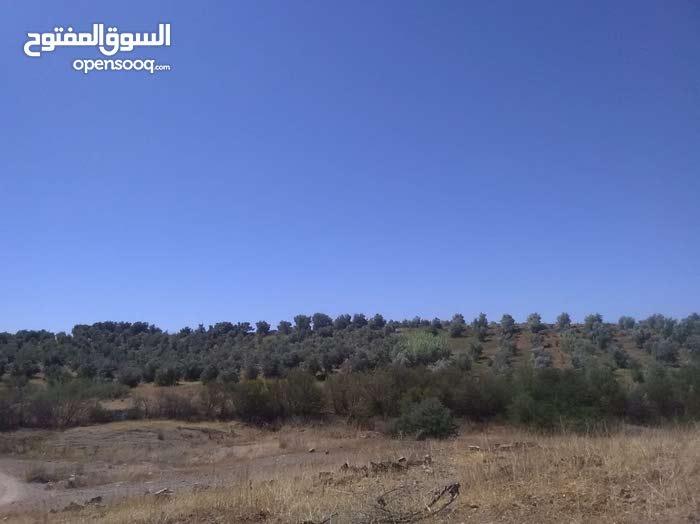 مزرعة مساحتها 400 هكتار تحتوي عل أشجار الزيتون وأشجار الحوامض.