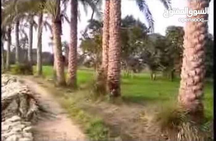 ارض طابو زراعي 5  دونم محافظة الناصريه منطقة العگر سعر الدونم 40 مليون