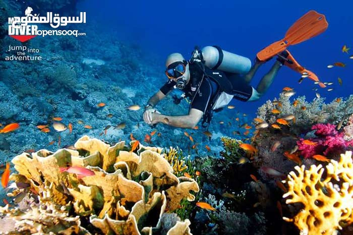 دورات غوص معتمدة DIVING COURSES AND TRIPS MUSCAT