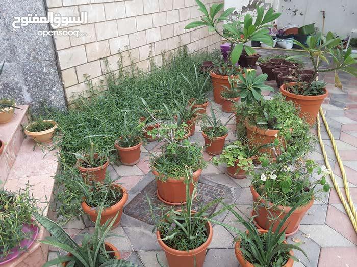 outdoor plants for your pleasure