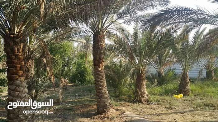 10 دونم زراعي عراقي صاحبها
