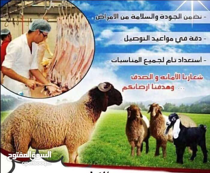 اغنام عربي للبيع مع التوصيل 60777317