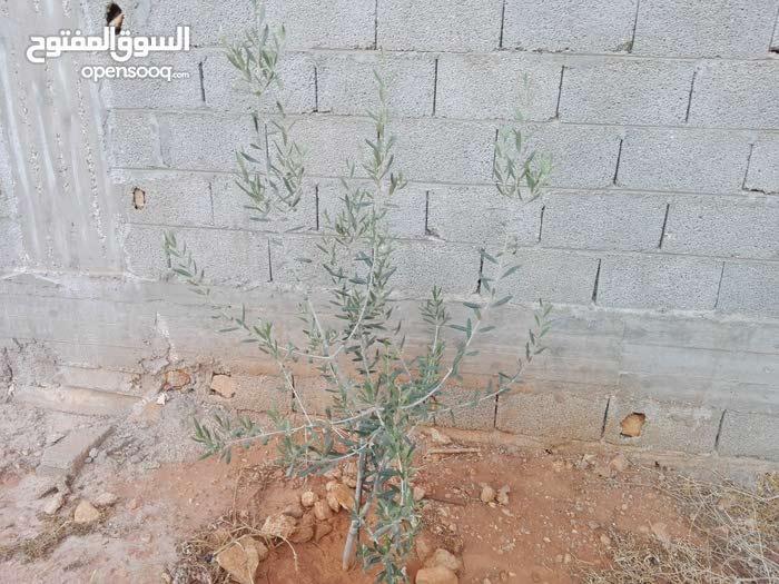 قطعة أرض في حي زمزم 2