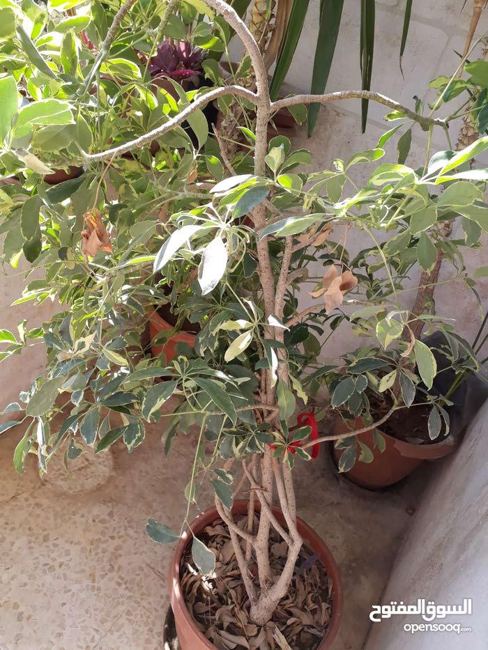 نباتات زينة