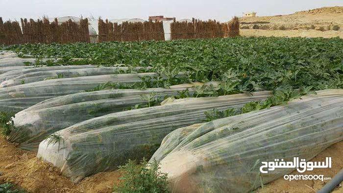 163فدان نصف ساعه من القاهرة كامله المرافق ري نيلي وكهرباء