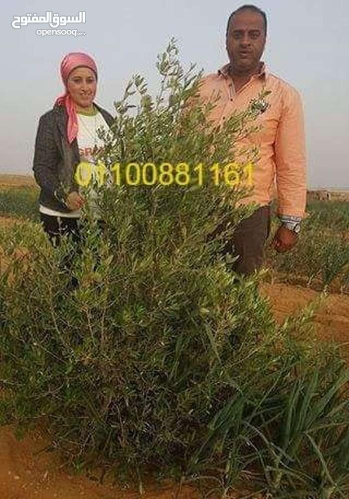 دلوقتى مع شركة الريف المصرى تقدر تمتلك مزرعة بارخص الاسعار