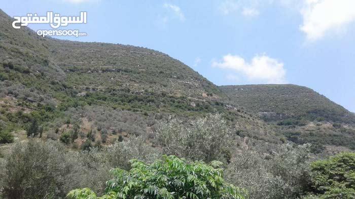 أرض زراعية مفرزة 2400 سهم في طرطوس( طابو أخضر)