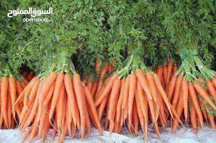توريد الخضروات والفواكه المطاعم والكافتريات والمحلات