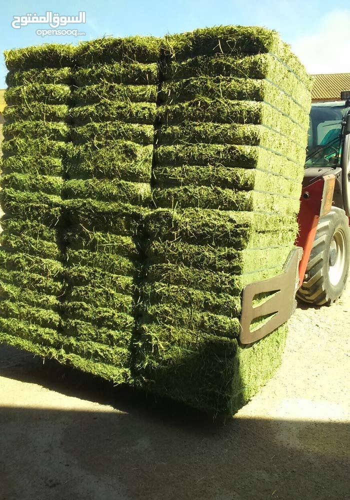 مزرعة ابقار منتجة للبيع بسعر مغري واستثمار ممتاز