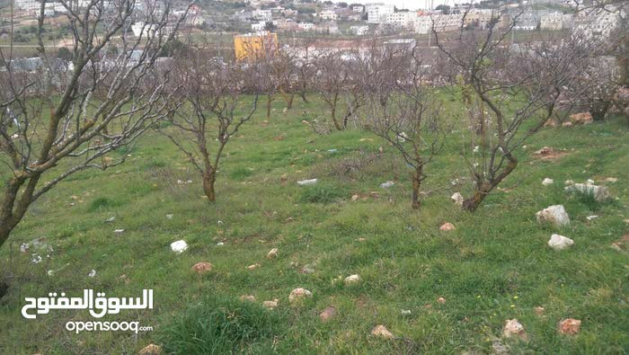 ارض 750م للبيع في عبين