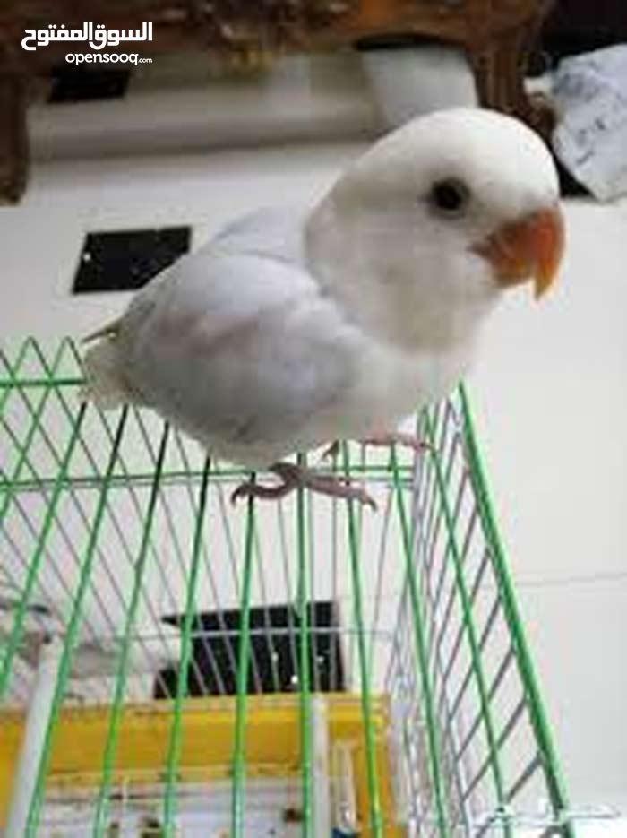 تبني جميع انواع الطيور المصابة وغير المصابة مثل الكروان وطيور الحب والحمام وغيره