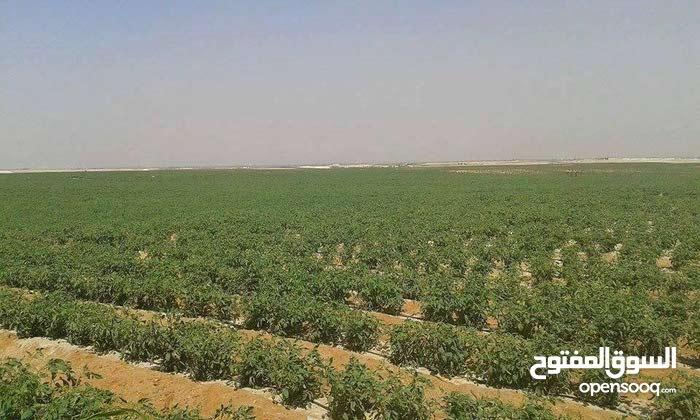 فرصة من ذهب لراغبي الزراعه والاستثمار امتلك ارضك ع طريق مصر الفيوم