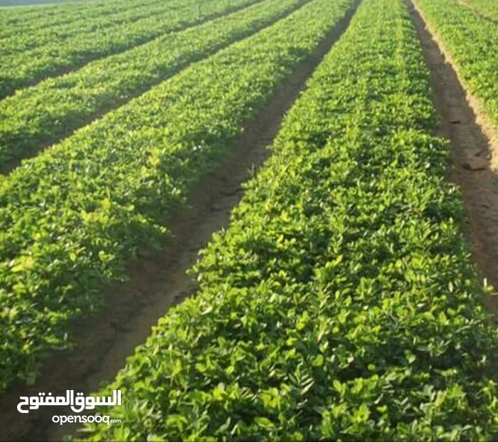 60 فدان . ارض زراعيه للبيع نواحي وادي النطرون