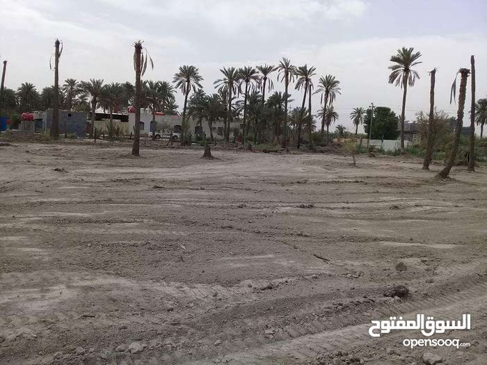 قطع للبيع في شط العرب الجزيرة شارع باب الهوى