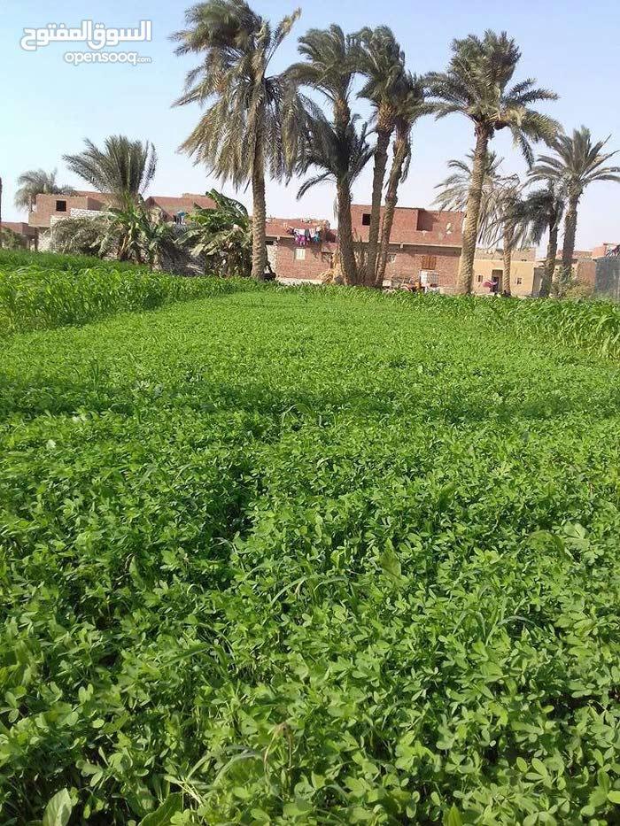 فرصة لاتعوض للبيع ارض 50 فدان صالحه لجميع الزراعات و المشاريع