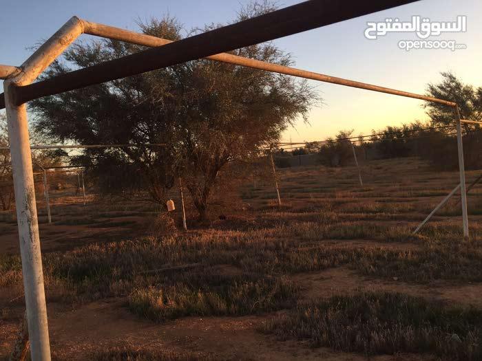 مزرعة في الطلحيه مساحة هكتار و961 متر قريبه من الطريق الرئيسي جهة المقابله شيل البنزينه