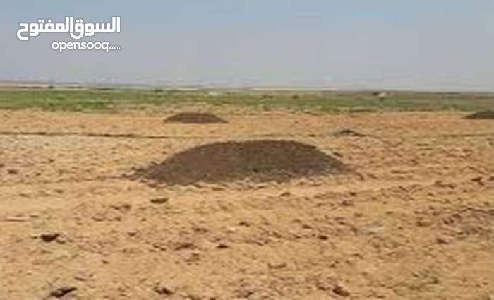 طريق مصر الفيوم الصحراوي  بأرض الفنانين
