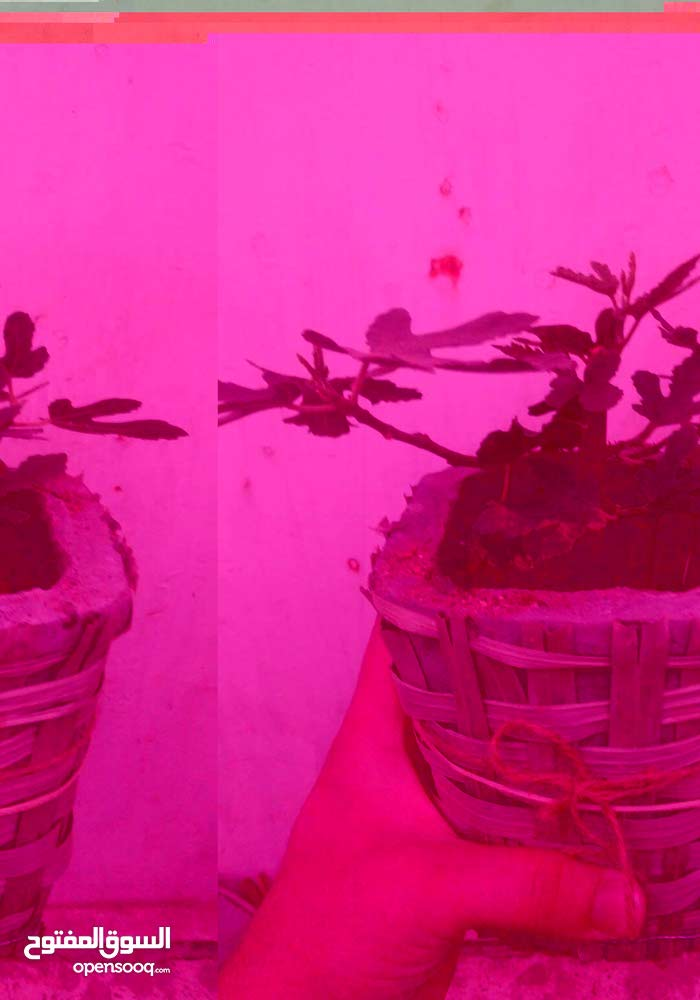 Amman - New Natural and Artificial Plants available for sale