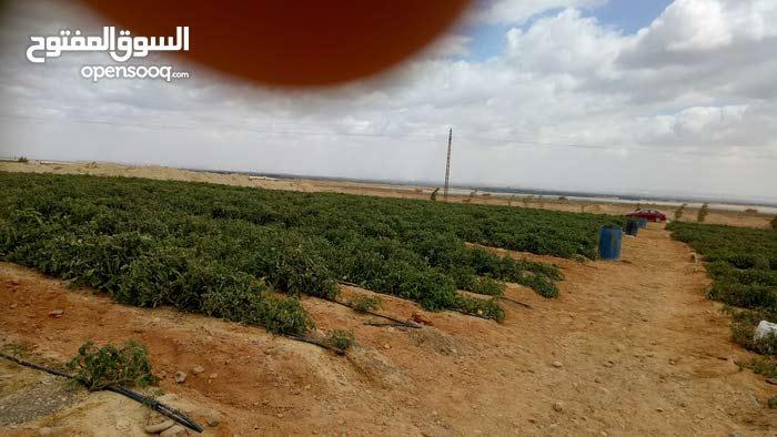 امتلك مزرعتك من شركه الامل لبيع اراضي بمساحات مختلفه