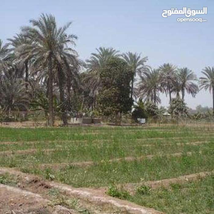 فرصه للجدين  55فدان (مسجله والحيزه والتمليك من المحافظه قبل الدفع