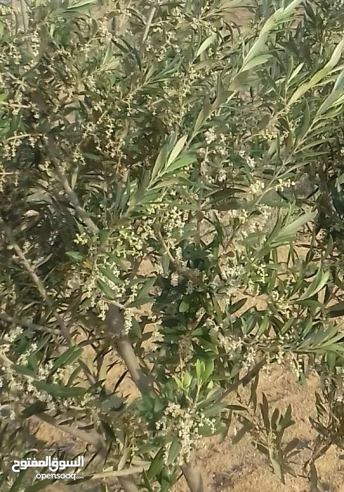 فرصة - بيع أرض فلاحية 22.5 هكتار بجلمة سيدي بوزيد