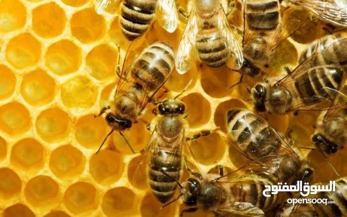 مركز الشفاء للعسل الطبيعي