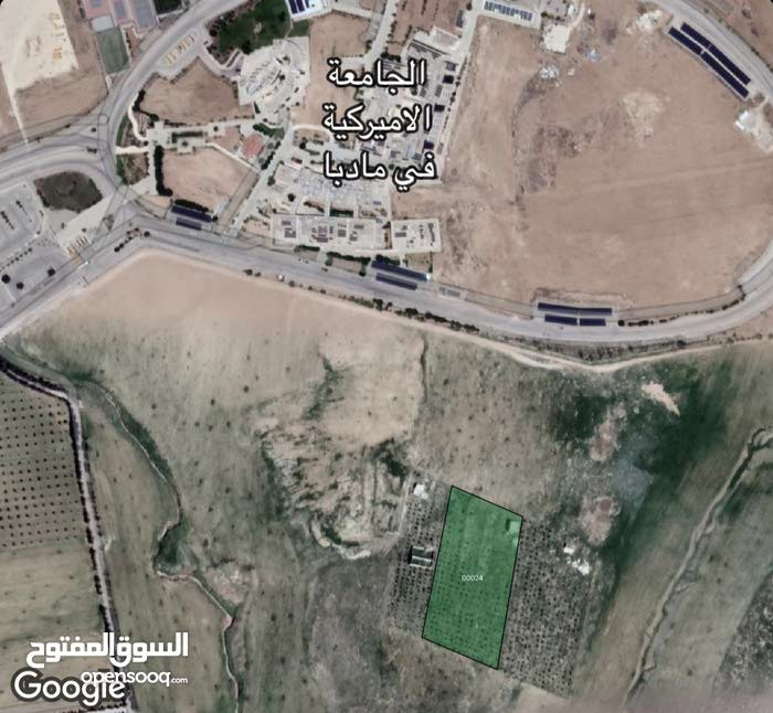 مزرعة زيتون مع بناء قرب سور الجامعة الامريكية