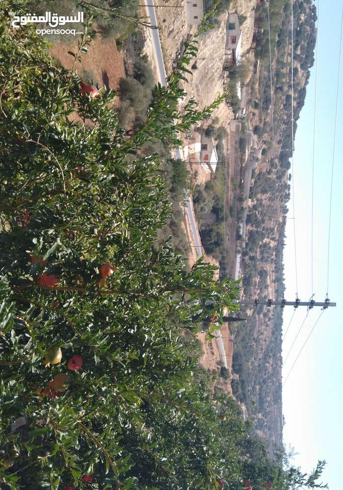 مزرعه للبيع في جلعد مع بيت ريفي 100 متر مطله مشغوله بالكامل جميع الشجار مسوره