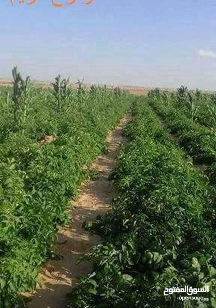 امتلك مزرعتك معانا بالبعد عن ميدان الرمايه 55 كم فقط
